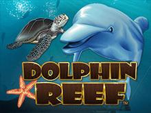 Dolphin Reef - играть онлайн в игровой слот с бонусами от Microgaming